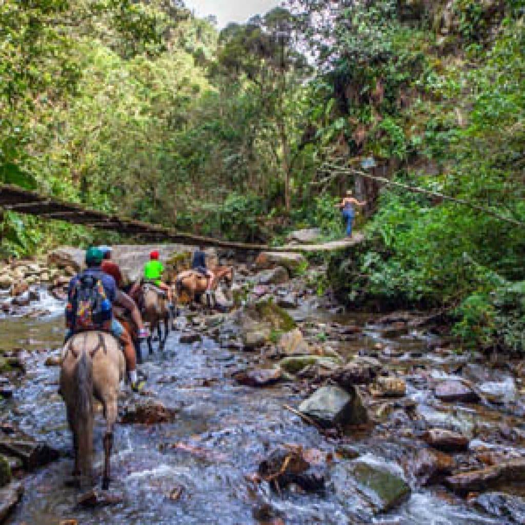ruta a caballo valle de cocora